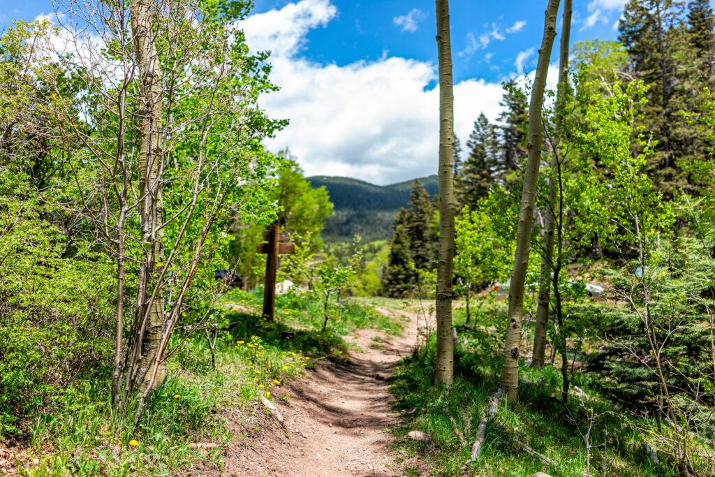 A trail through Santa Fe National Forest.