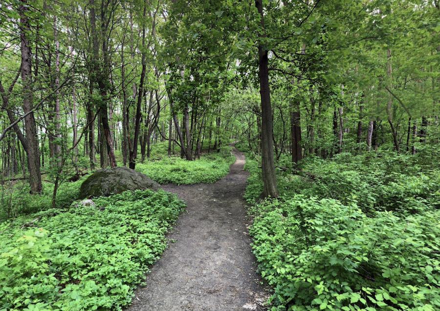 A trail through the Bird Hills Nature Area in Michigan.