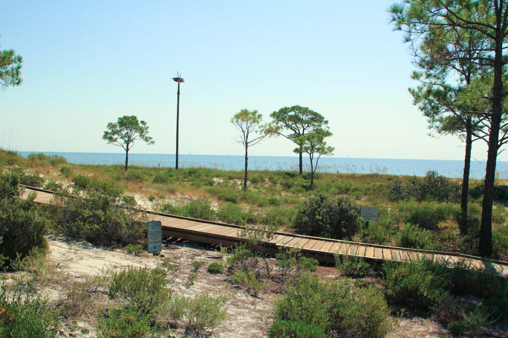 A trail through the Dauphin Island Audubon Bird Sanctuary in Alabama.
