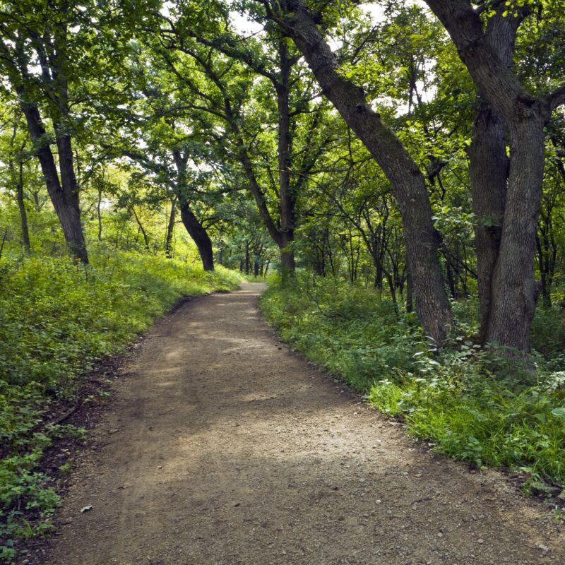 A trail through the Konza Prairie Preserve in the Flint Hills of Kansas.