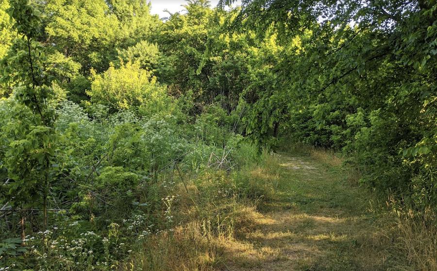 A trail through the Porter West Preserve.