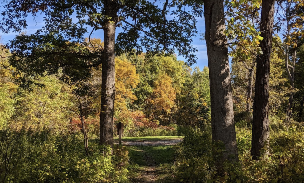 A trail through the Yellow River State Forest in Iowa.