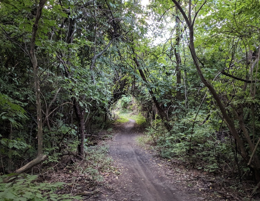 A trail through Wolf Road Woods in Cook County, Illinois.