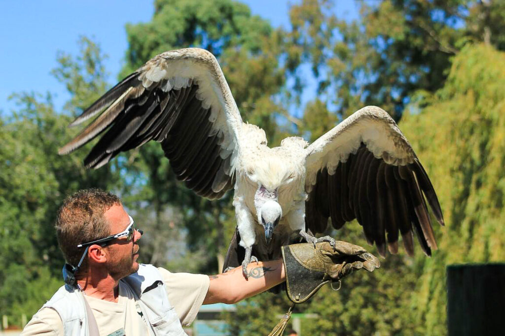 A trainer at Eagle Encounters holds a wild bird.