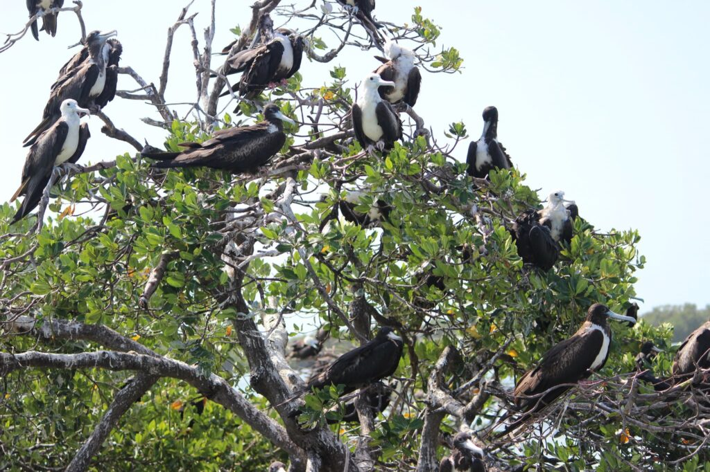 A tree full of birds at the Isla Pajaros refuge.