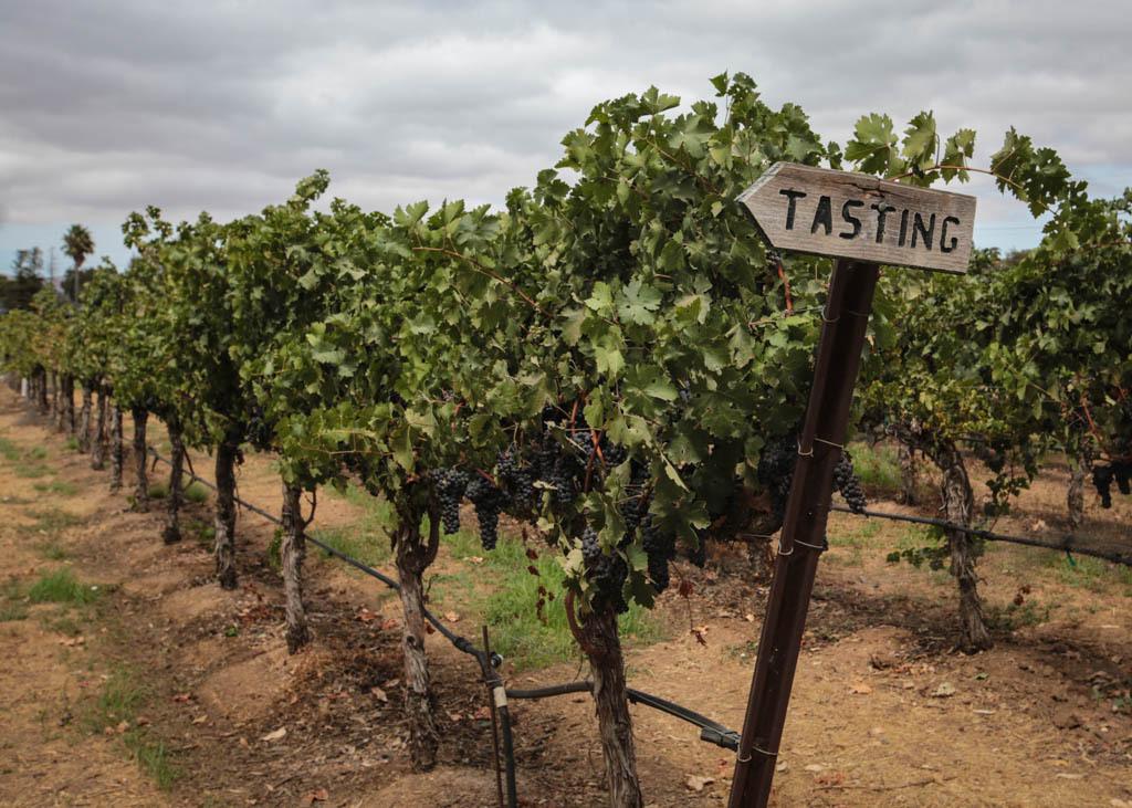 A vineyard in Livermore, California.