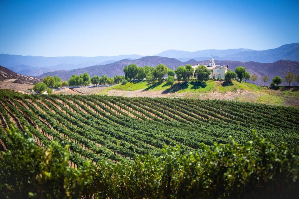 A vineyard in Temecula, California.