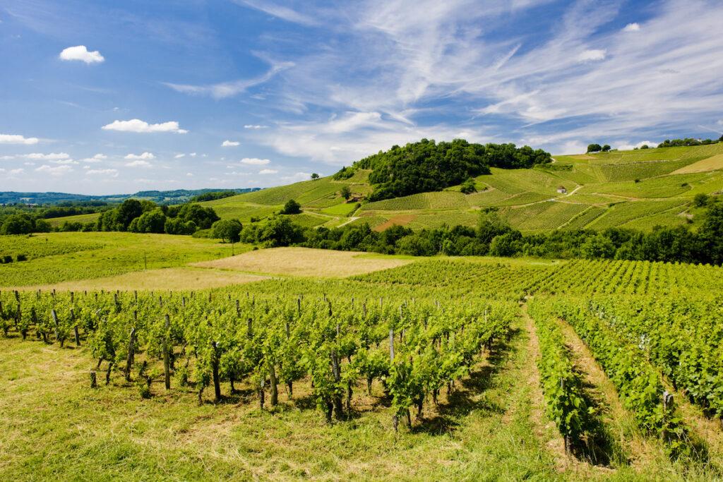 A vineyard in the Jura wine region of France.