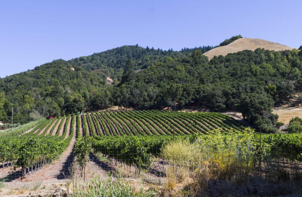 A vineyard outside of Santa Rosa, California.