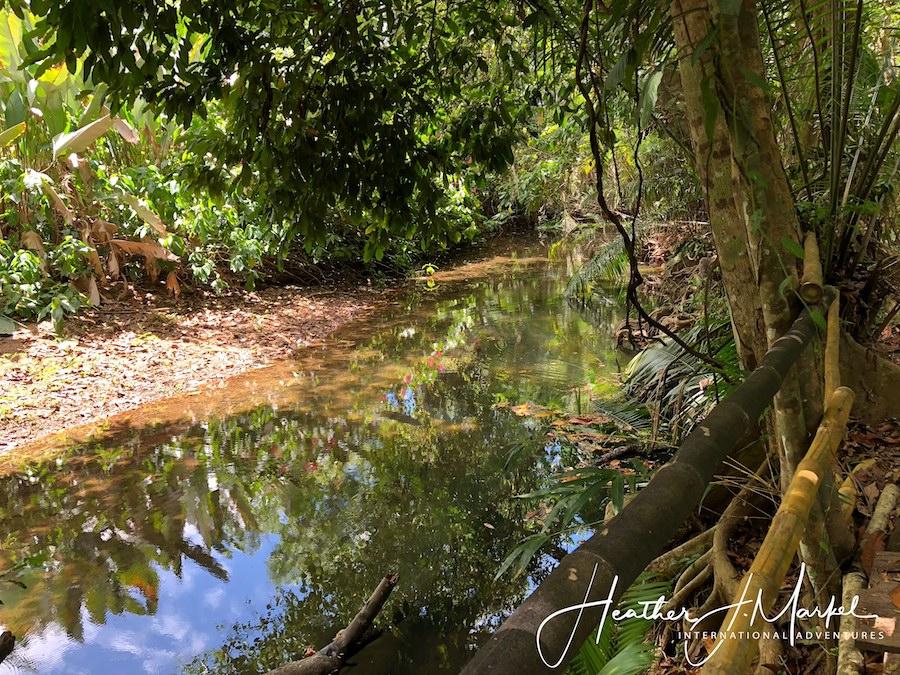 A walk through the jungle in Uvita, Costa Rica.