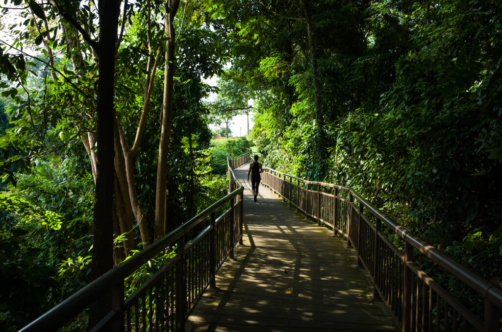 A walking path in Mount Faber Park.