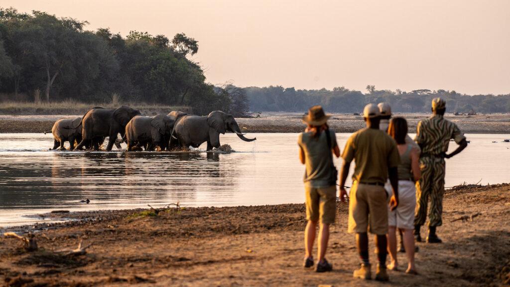 A walking safari via Remote African Safaris.