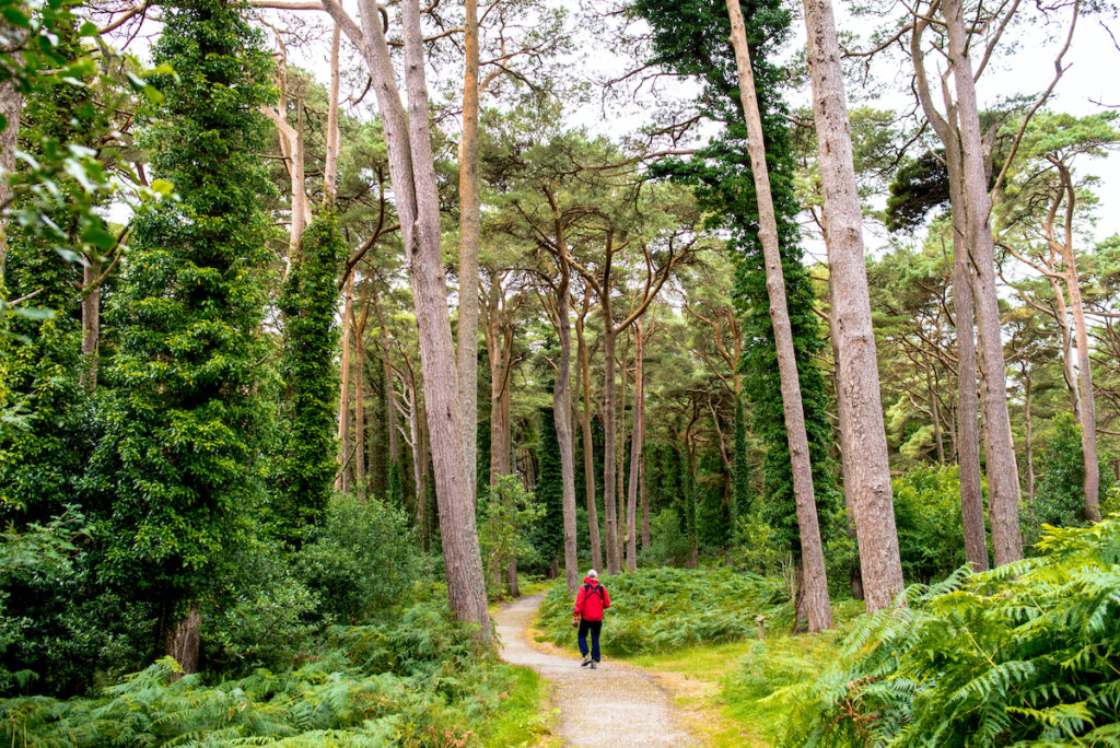 A walking trail in Glenveagh National Park.