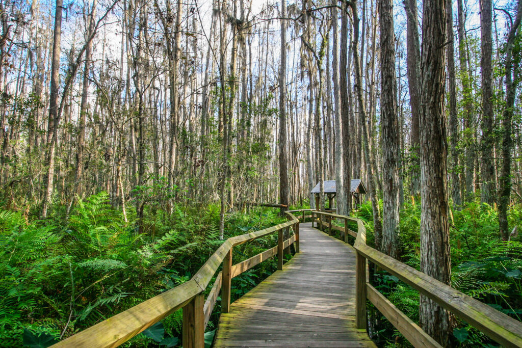 A walkway through Everglades National Park.