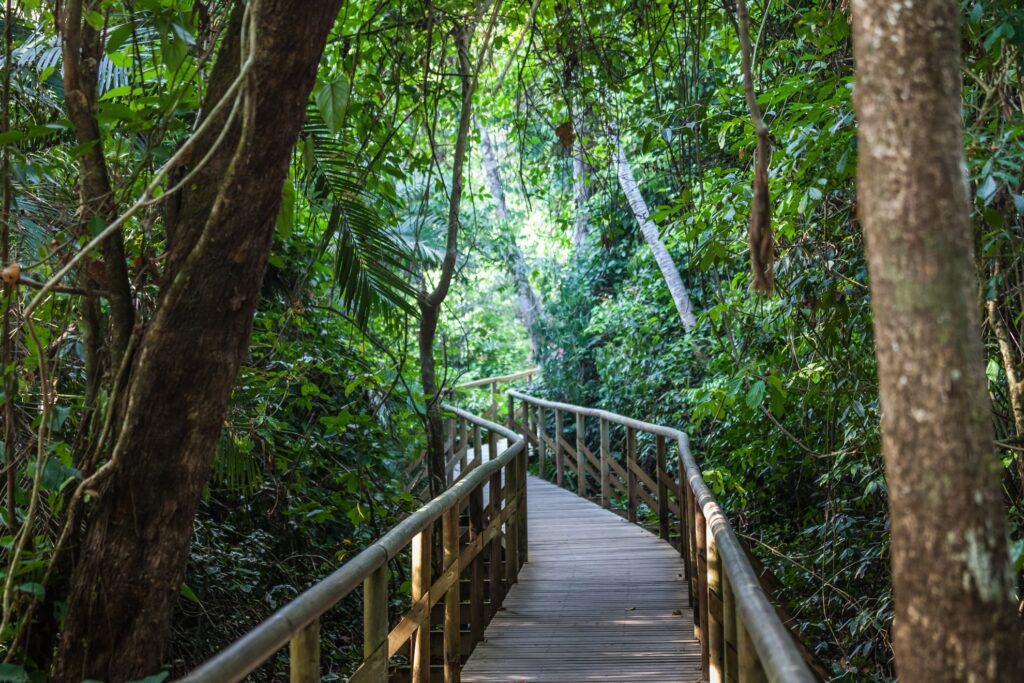A walkway through Manuel Antonio National Park.