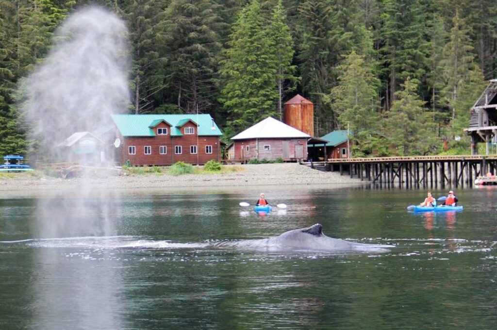 A whale at Steamboat Bay Fishing Club.