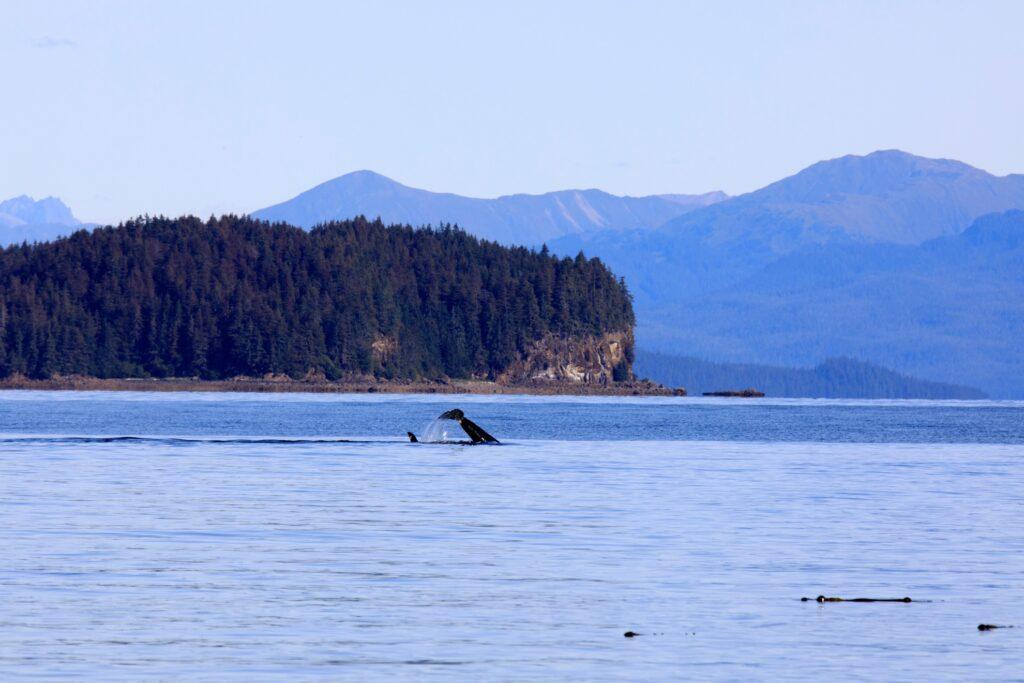 A whale watch tour near Icy Strait Point, Alaska.