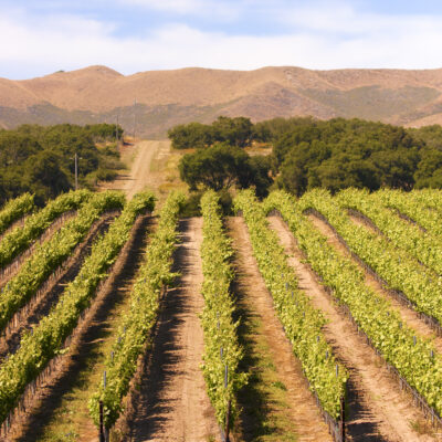 A winery in Paso Robles, California.