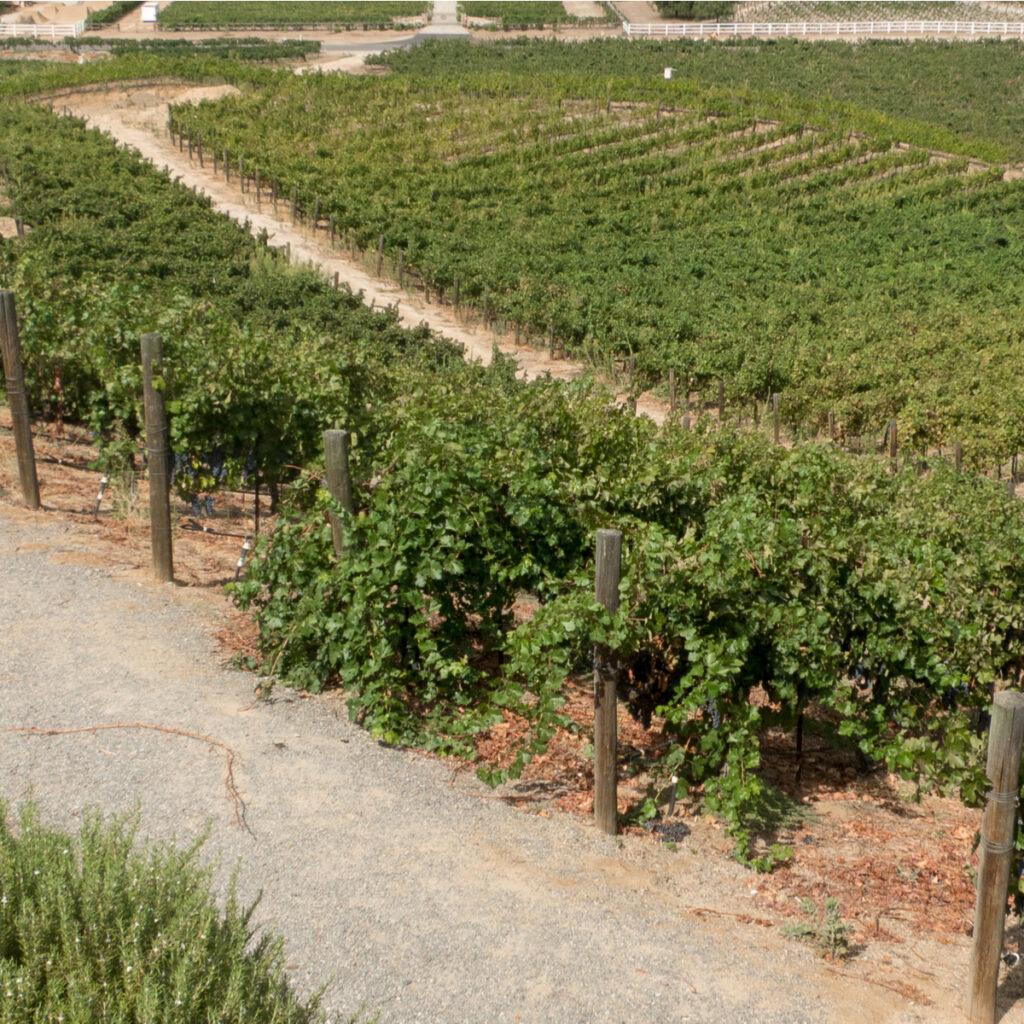 A winery near Temecula, CA.
