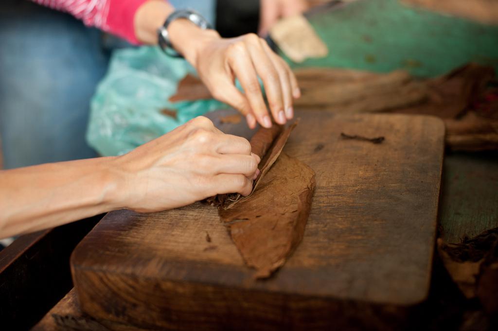 A woman's hands rolling a cigar