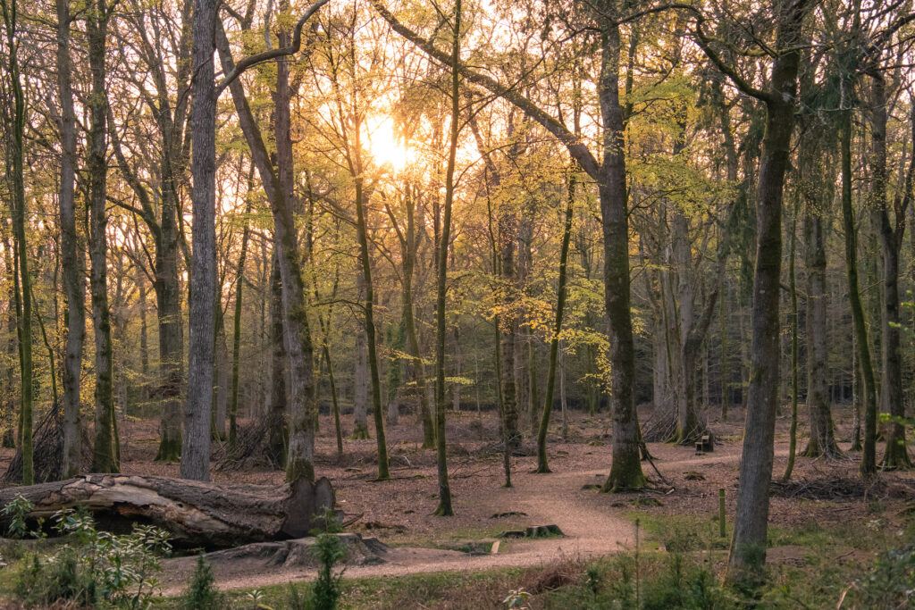 A wooded trail in New Forest National Park.