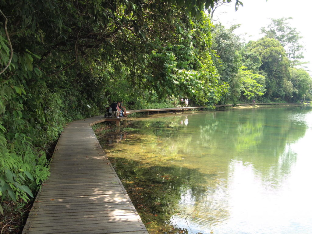 A wooden walkway at the MacRitchie Reservoir Park.
