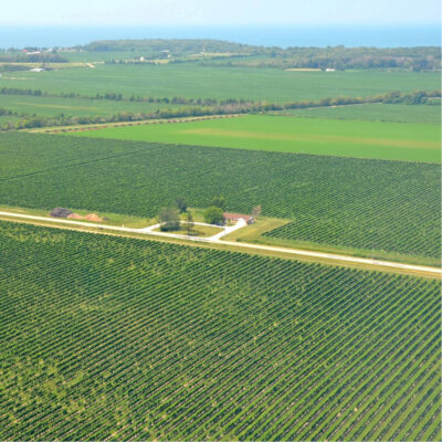 Aerial view of the vineyards near Lake Erie