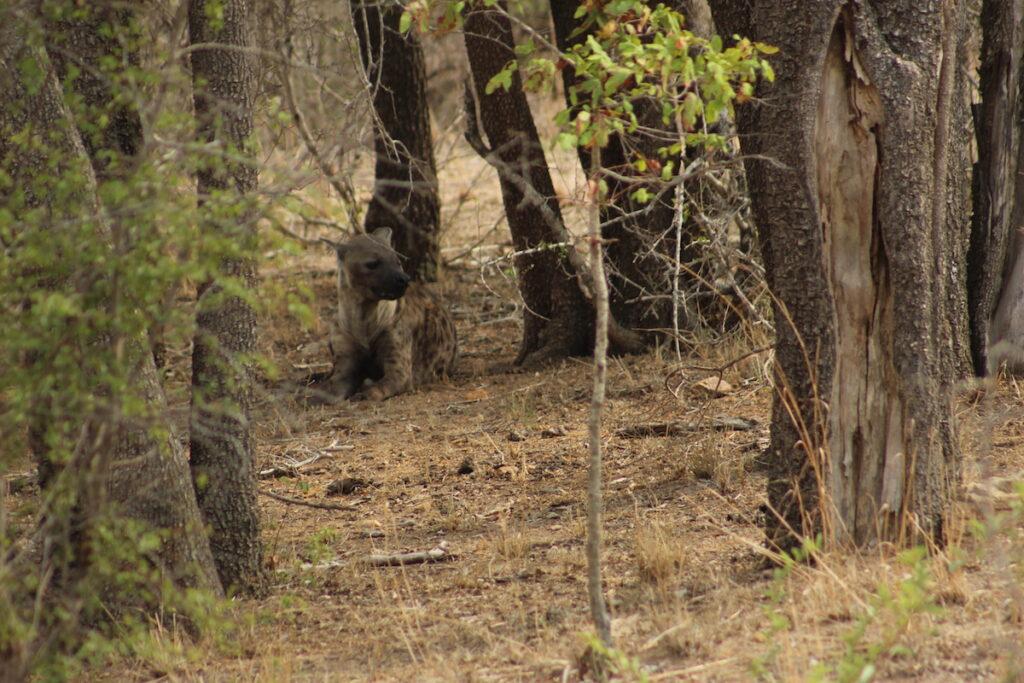 African wildlife lurking near the writer's lodge.