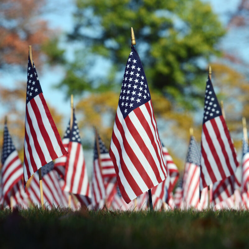 American flags on display for Veterans Day.