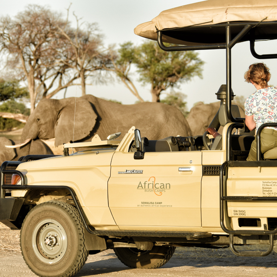 An African safari via African Bush Camps.