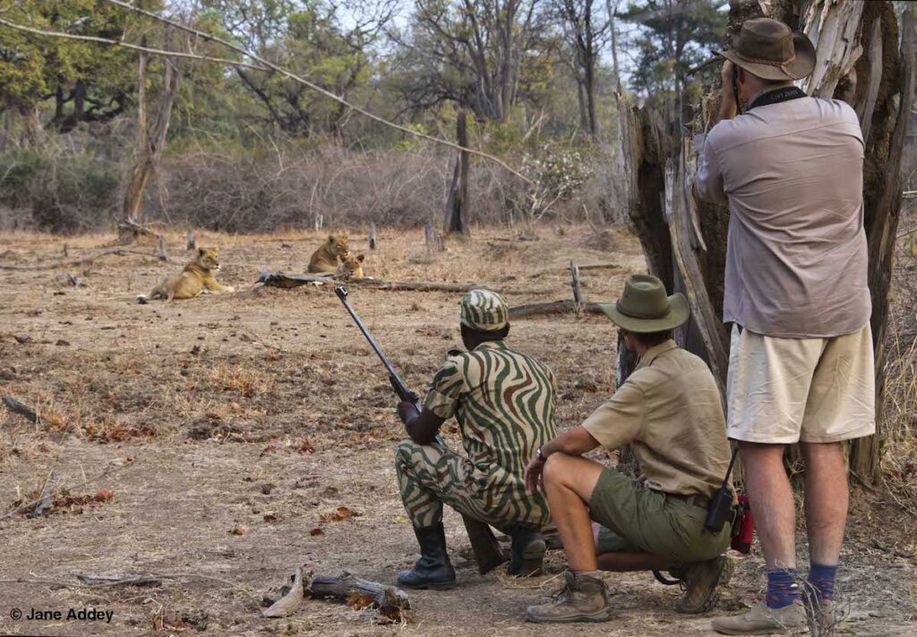 An African safari with Surefoot Safaris.