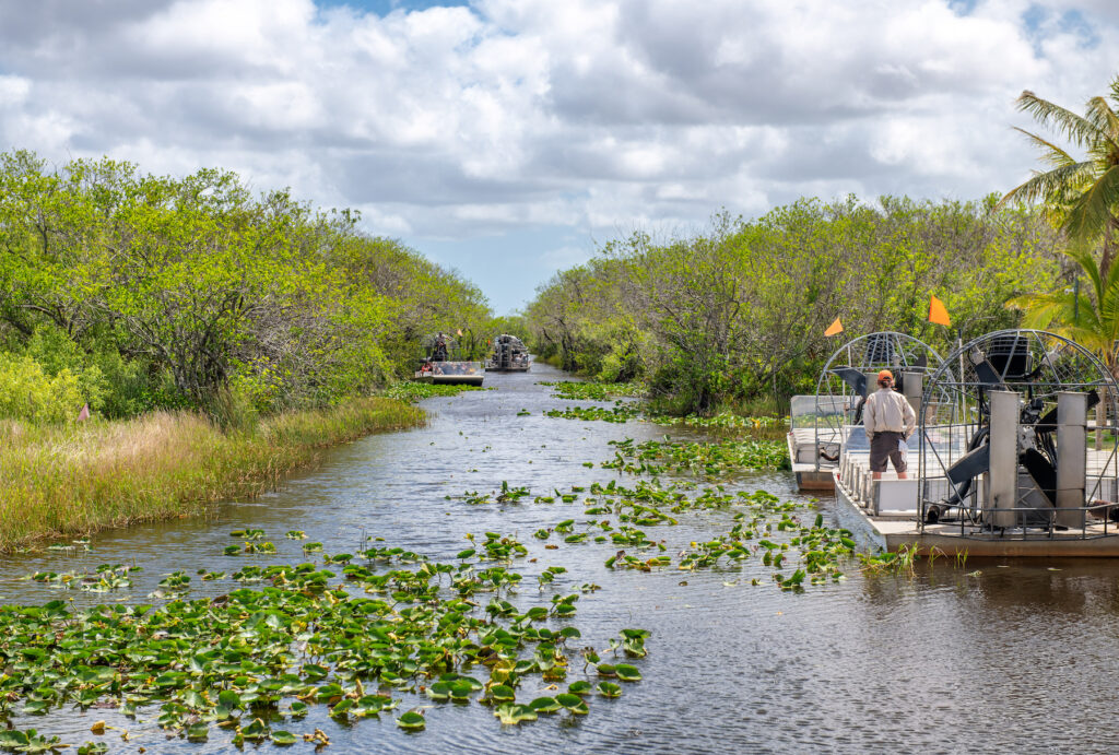 An airboat ride through Everglades National Park.