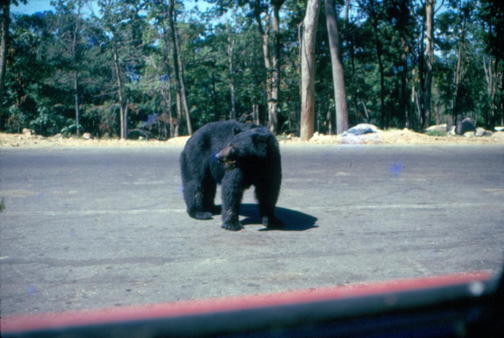 An old photo of Jungle Habitat.