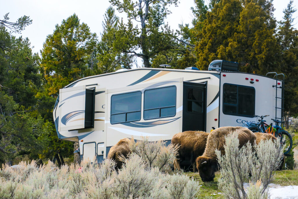 An RV at Mammoth Campground in Yellowstone National Park.