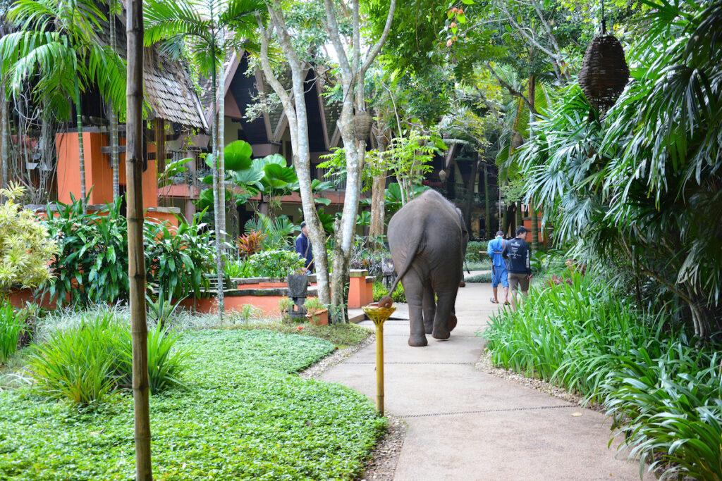 Anantara Golden Triangle Elephant Camp in Chiang Rai, Thailand.