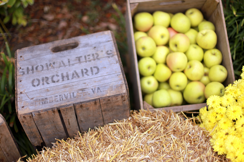 Apples from Showalter's Orchard.