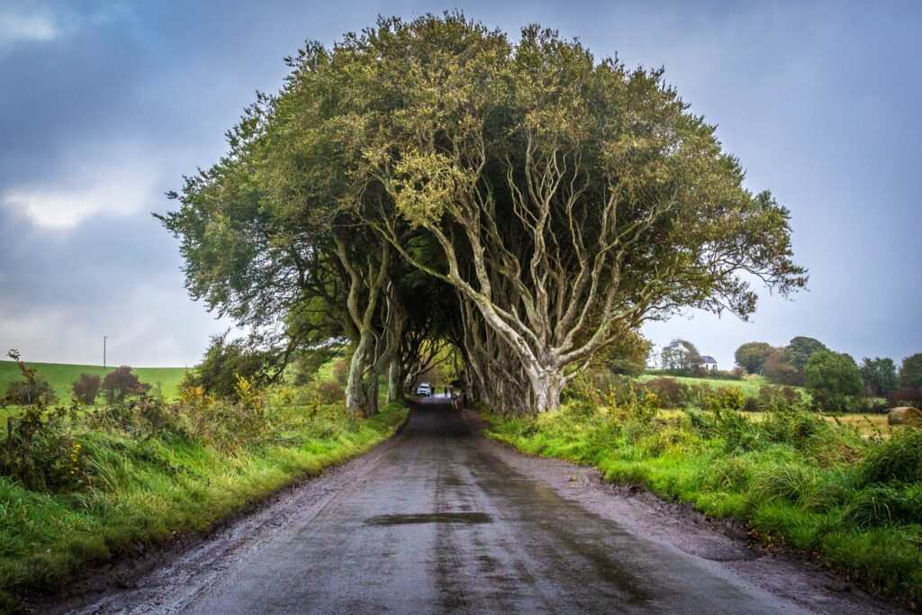 Approaching the Dark Hedges tunnel.