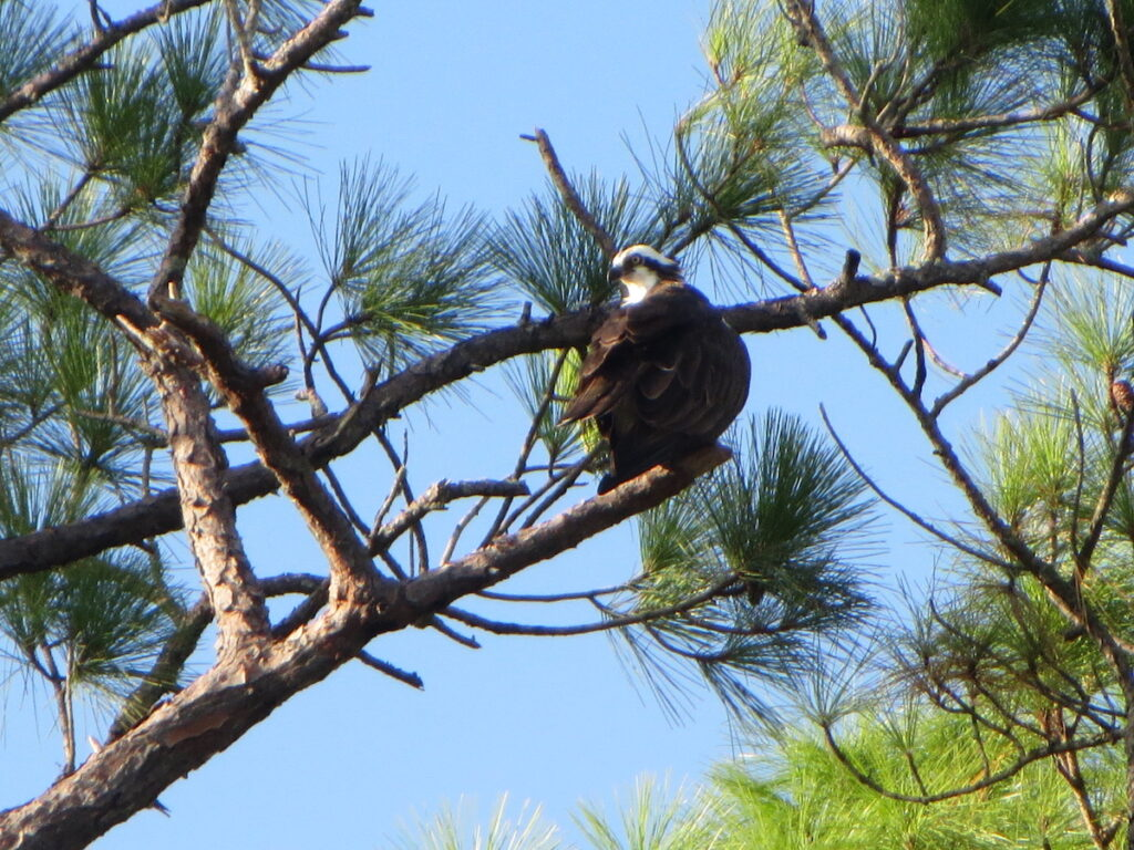 Audubon Bird Sanctuary, Dauphin Island.