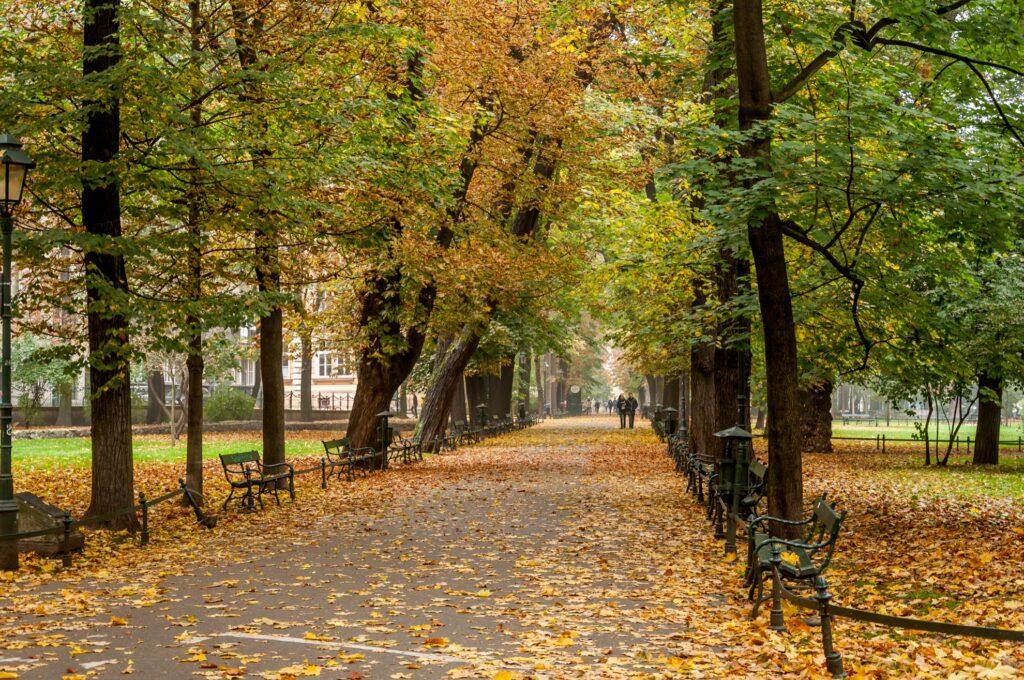 Autumn leaves in Krakow's Planty Park.