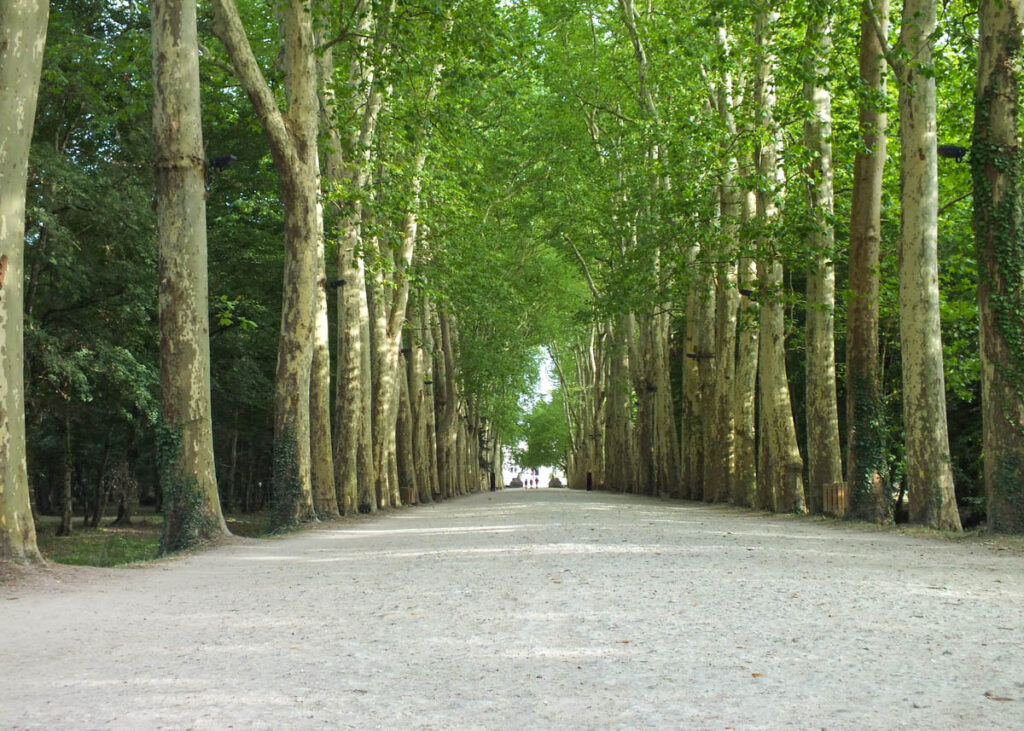 Avenue of trees leading to the Chateau De Chenonceau.