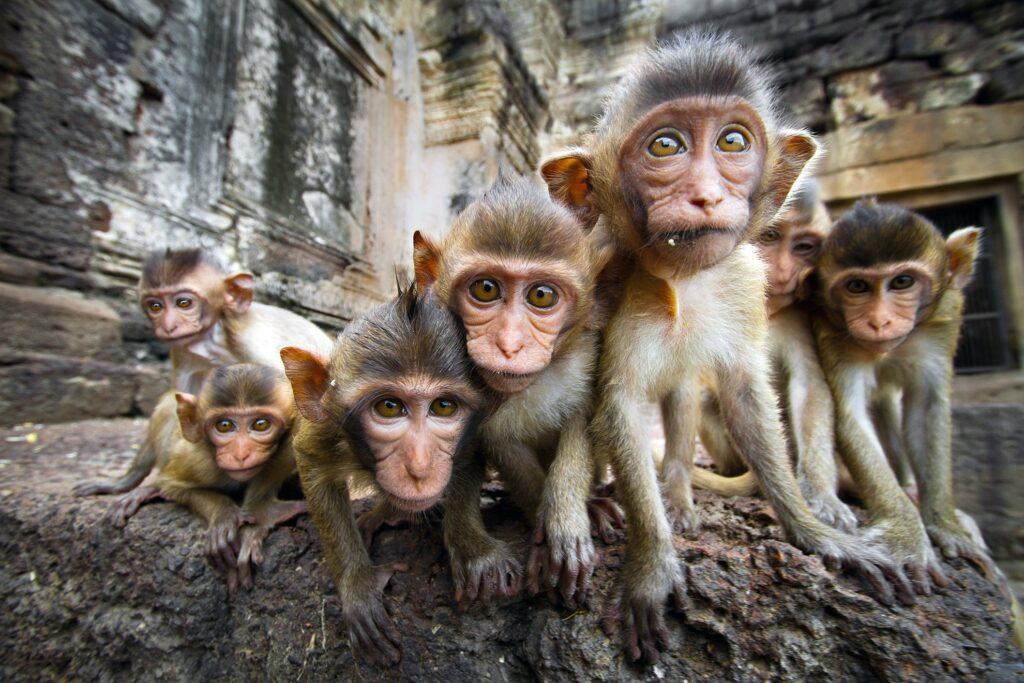 Baby monkeys in Thailand.