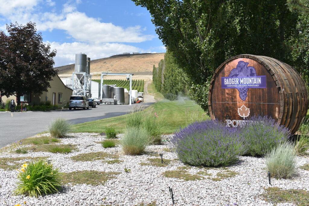Badger Mountain Vineyard in Kennewick, Washington.