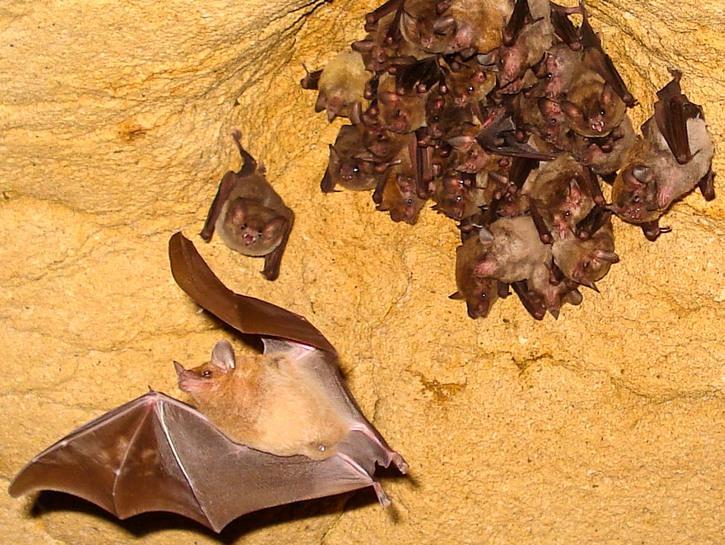 Bats Venado Cave Costa Rica