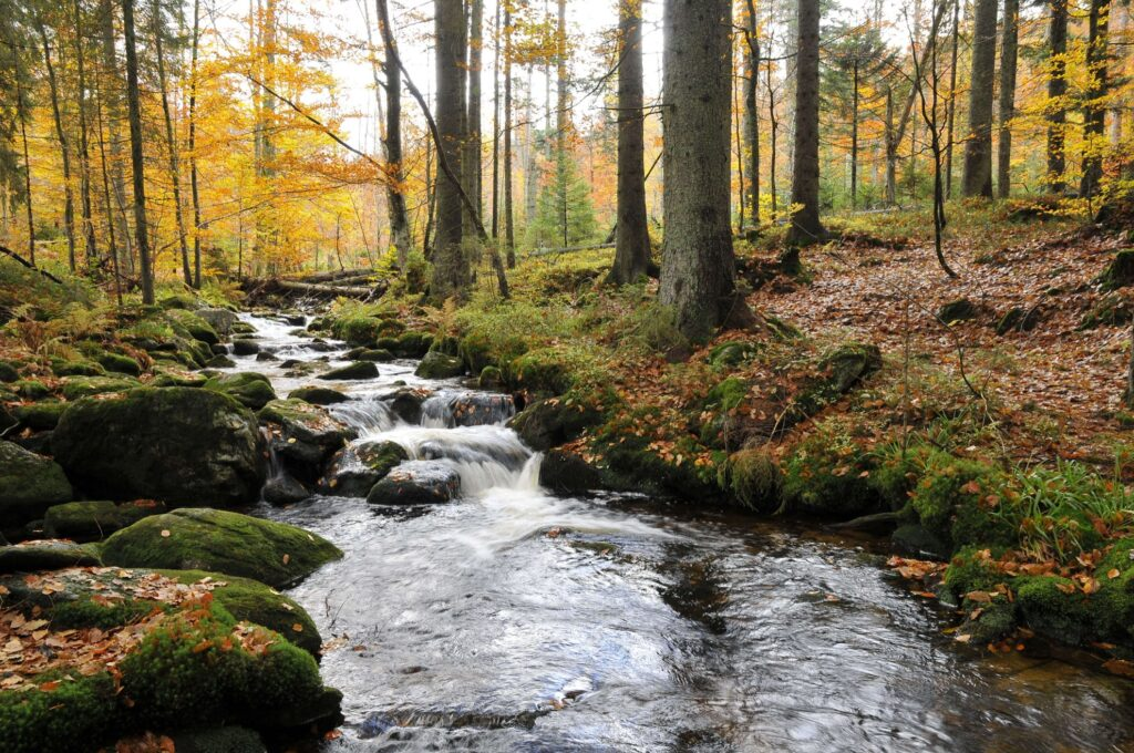 Bavarian Forest National Park on the Germany/Czech border.