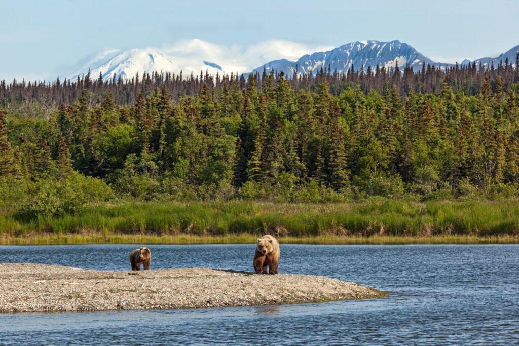Bears in Katmai National Park, Alaska.
