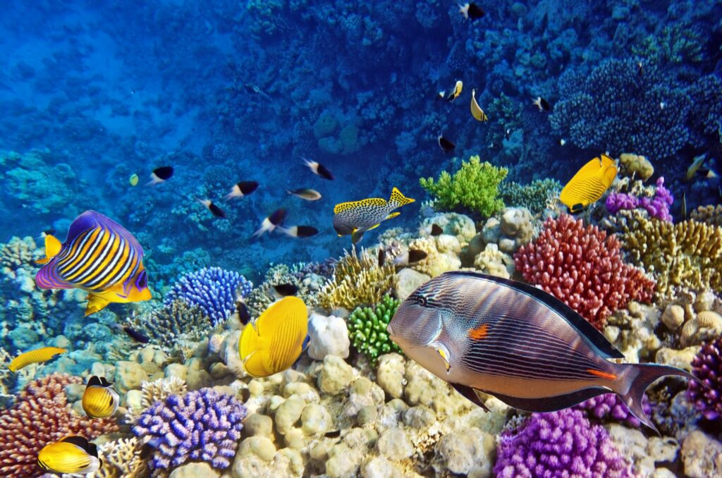 Beautiful coral in the Red Sea.
