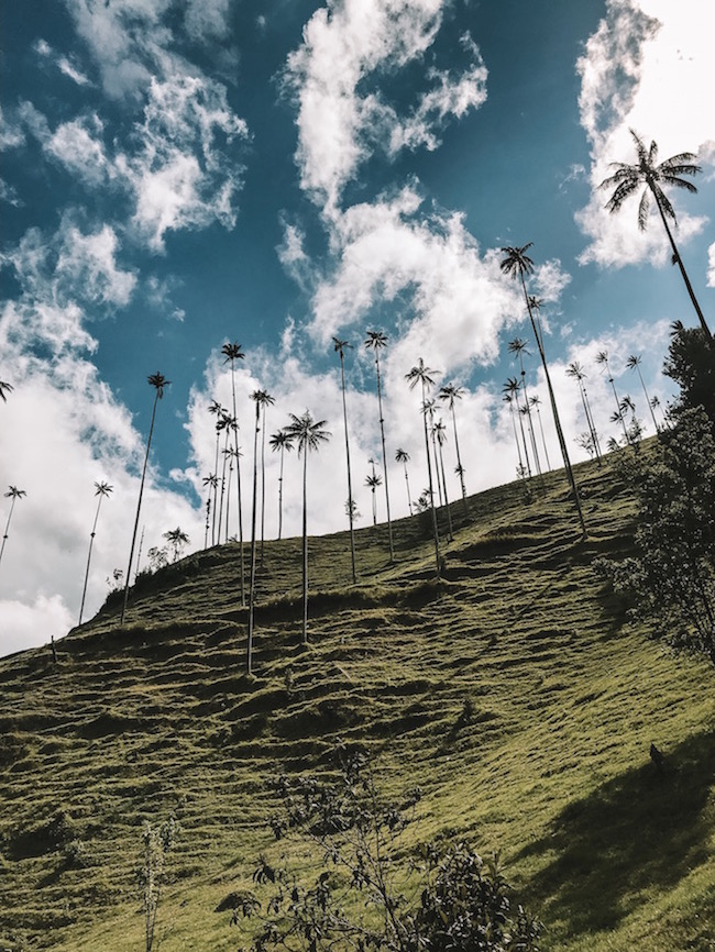 Beautiful scenery in the Cocora Valley.