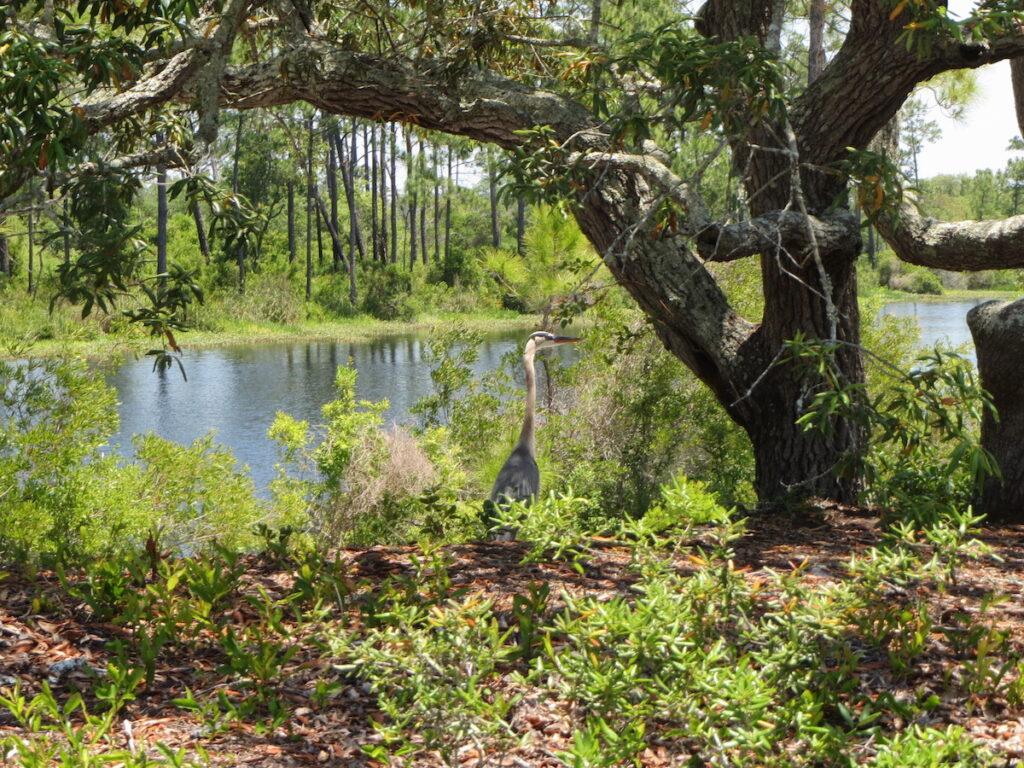 Big Lagoon State Park in Pensacola, Florida.