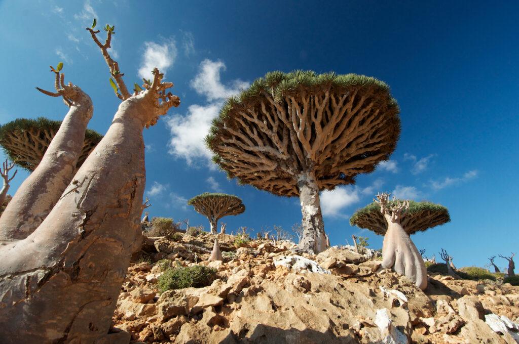 Biodiversity, Socotra, Yemen.