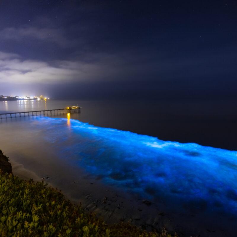 Bioluminescent ocean waters.